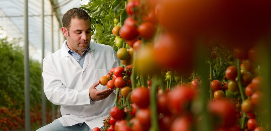 genetic engineering and genetically modified food Yet there is considerable opposition to the use of genetically modified plants for food production and other uses genetic engineering offers a time-saving method for producing larger, higher-quality crops with less effort and expense.